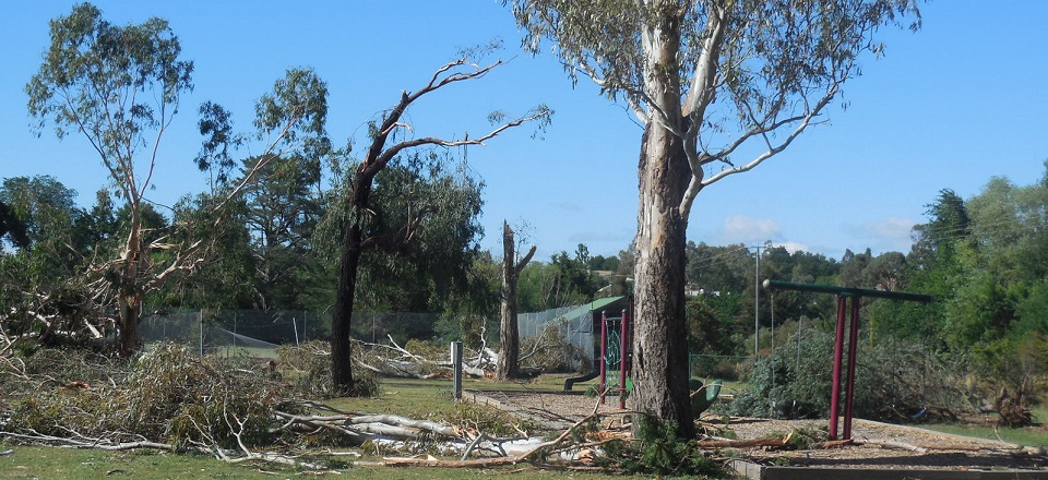 Trees blown over at playground