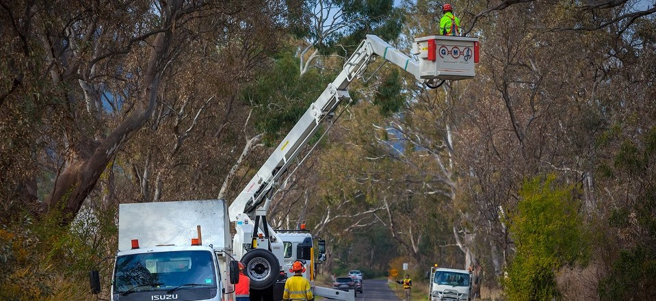 Tree pruning in Mount Alexander Shire