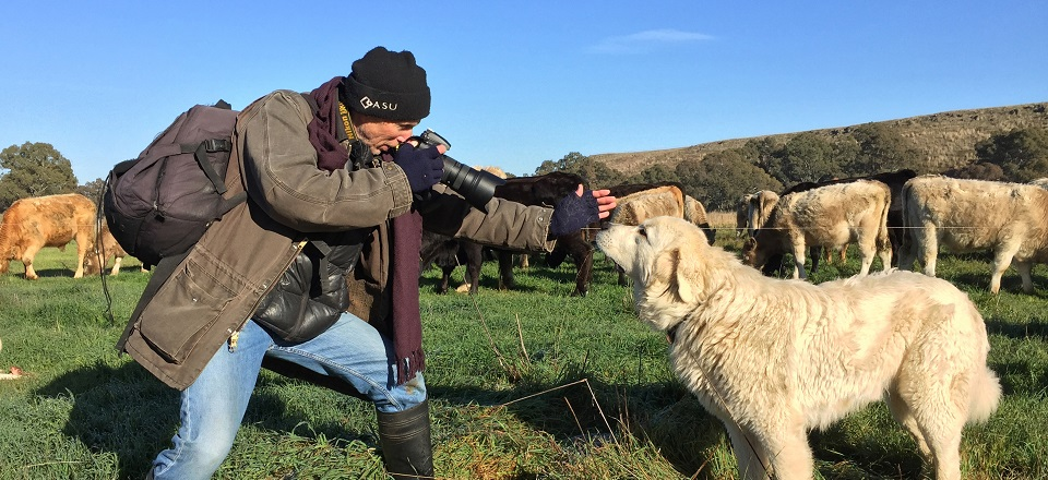 Image: Brendan taking photos of dog in paddock  Link to child page: Small business workshops