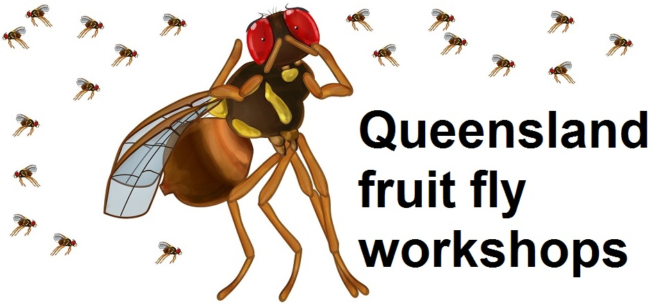 Graphic of fruit fly with Queensland fruit fly workshops text.