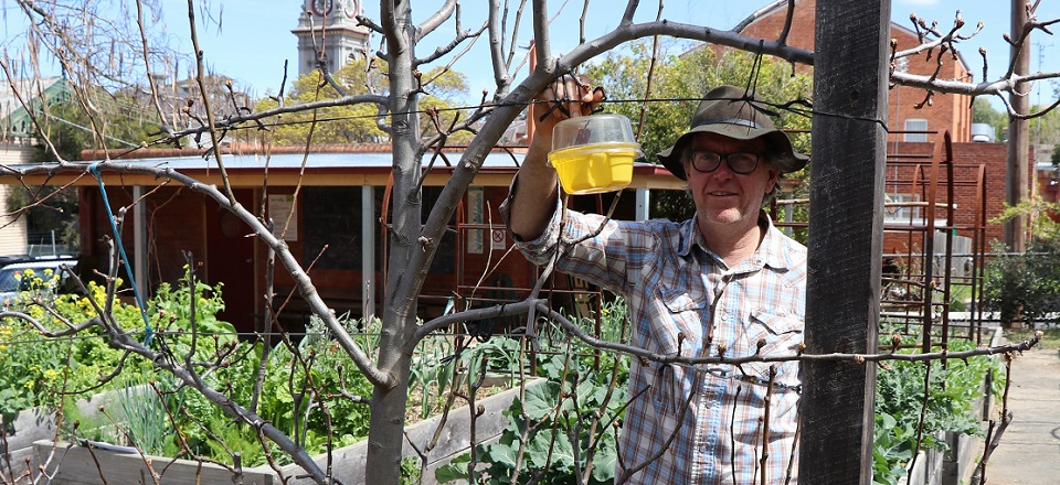 Terry Willis from Harcourt Fruit Fly Action Group with a Queensland fruit fly trap.